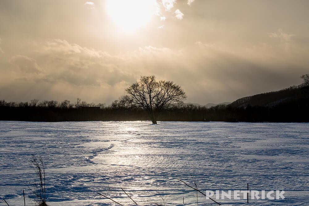 ハルニレの木 豊頃町 夕日