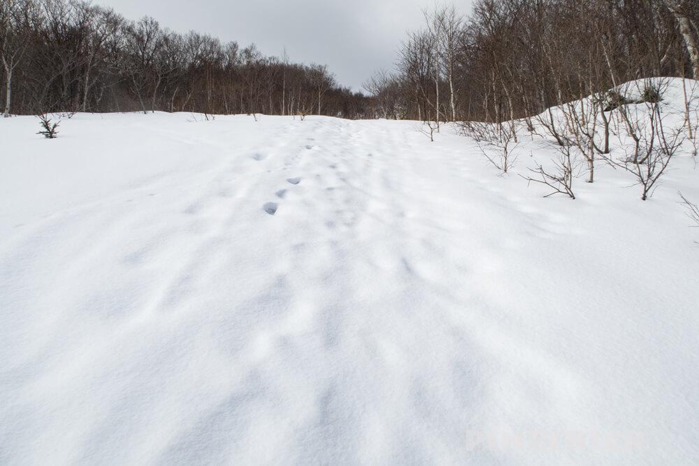 岩内岳 登山道 夏道 岩内町 山スキー
