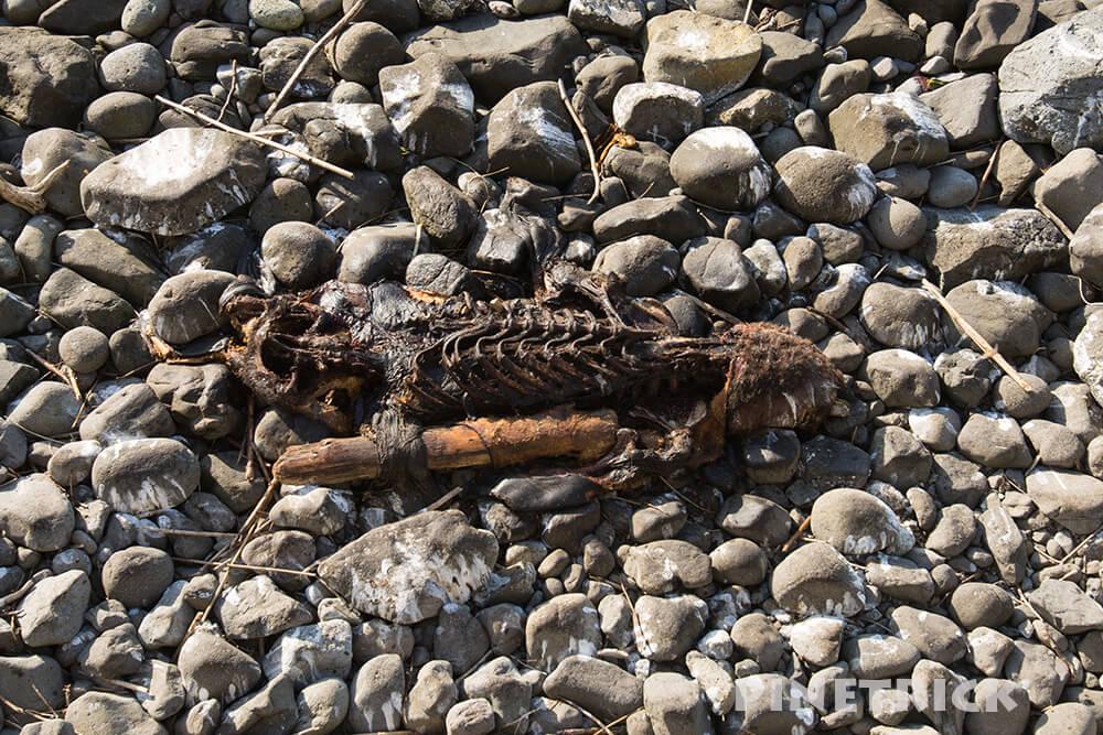 海 アザラシ 死体 骨