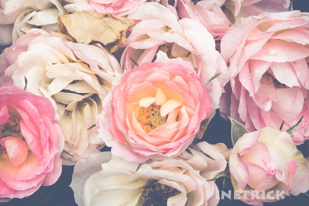 バラ 花 枯れる