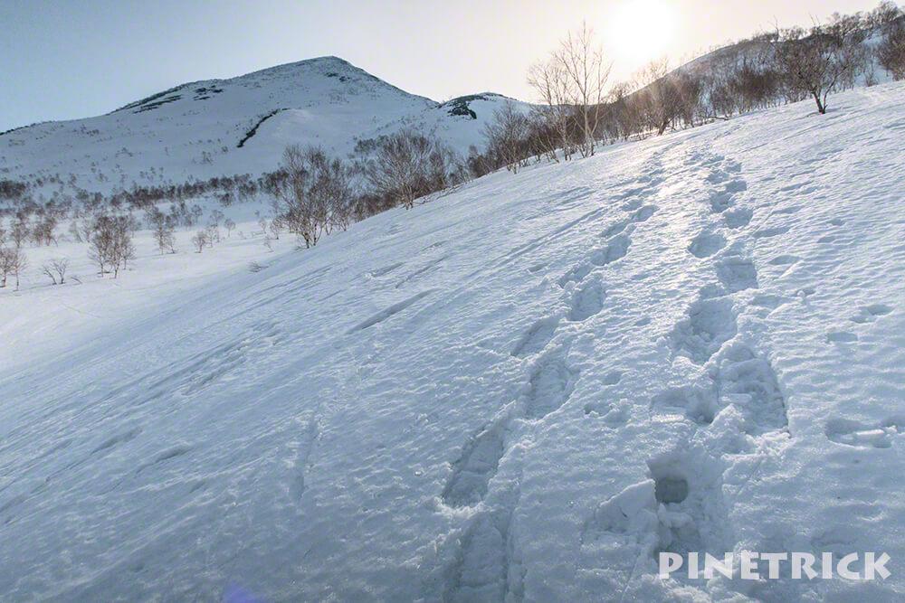 ニセコアンヌプリ 五色温泉 トレース 登山 冬山 スノーシュー 山スキー