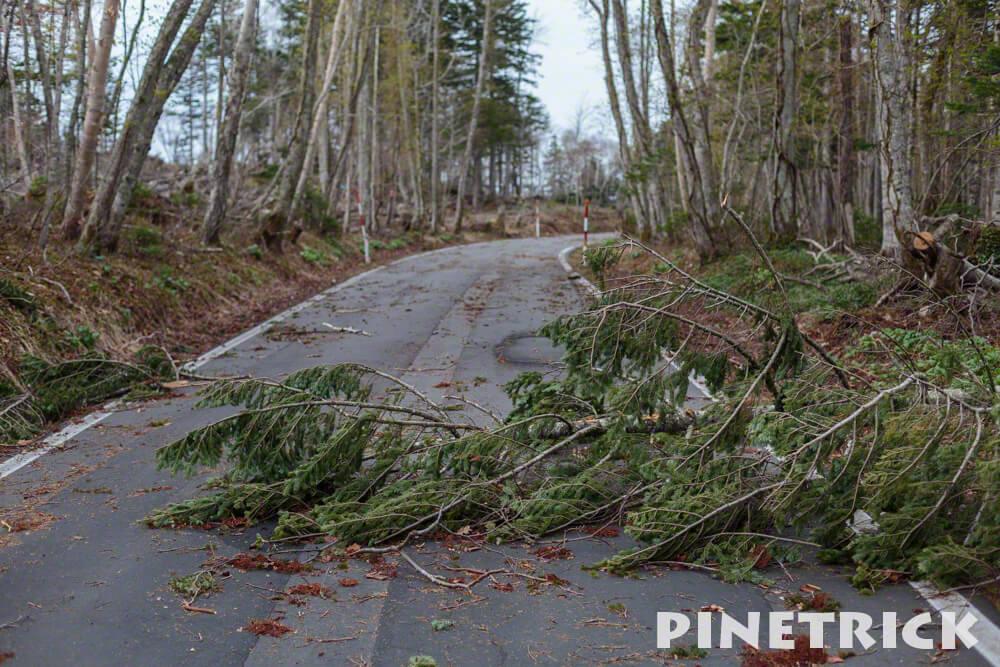 樽前山 登山 道道141号線 樽前錦岡線 冬季 通行止め 倒木