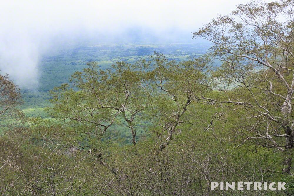 風不死岳 登山 原生林