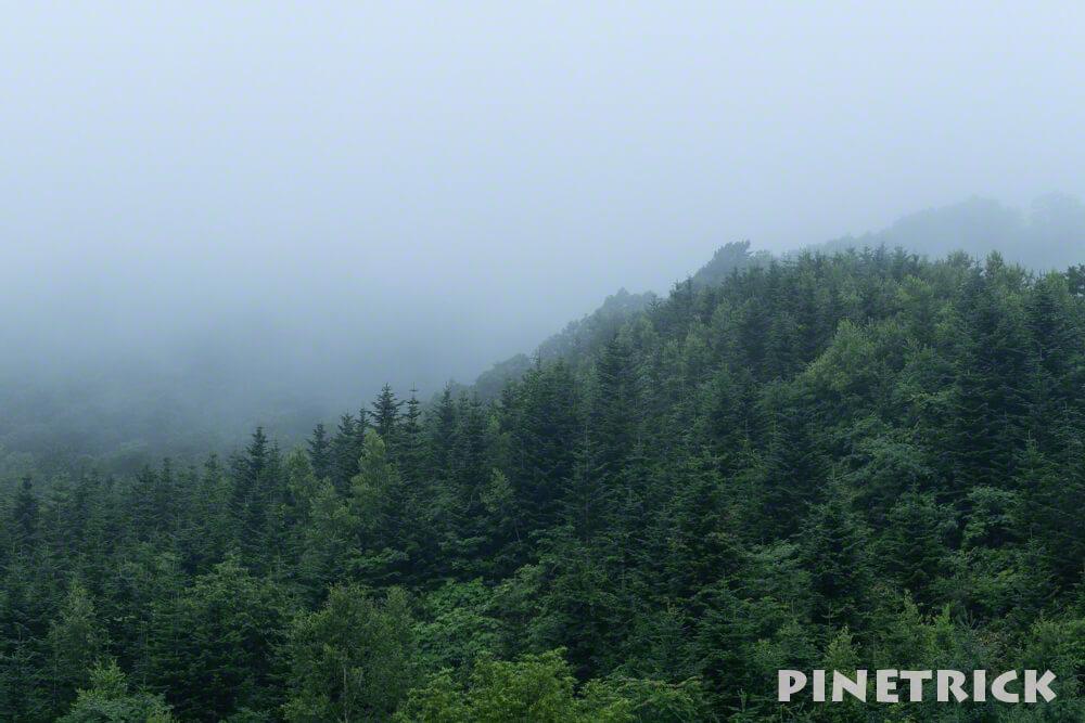 霧 緑 森 ガス