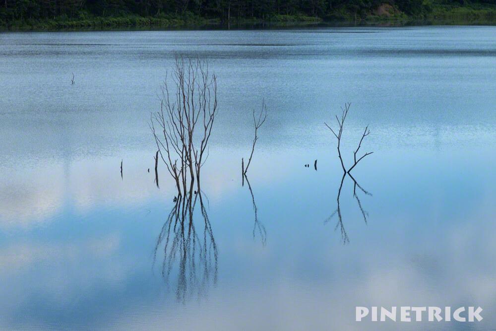 当別町 ふくろう湖 枯れ木 立ち木 シンメトリー