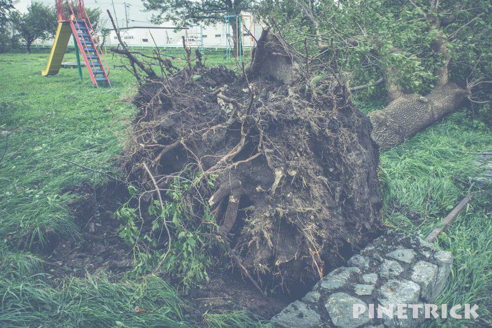 台風21号 暴風雨 札幌市 9月4日 倒木 公園