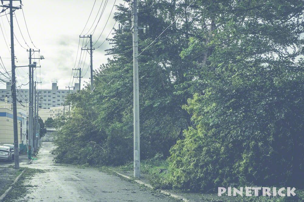 台風21号 暴風雨 倒木 公園 札幌市 9月4日