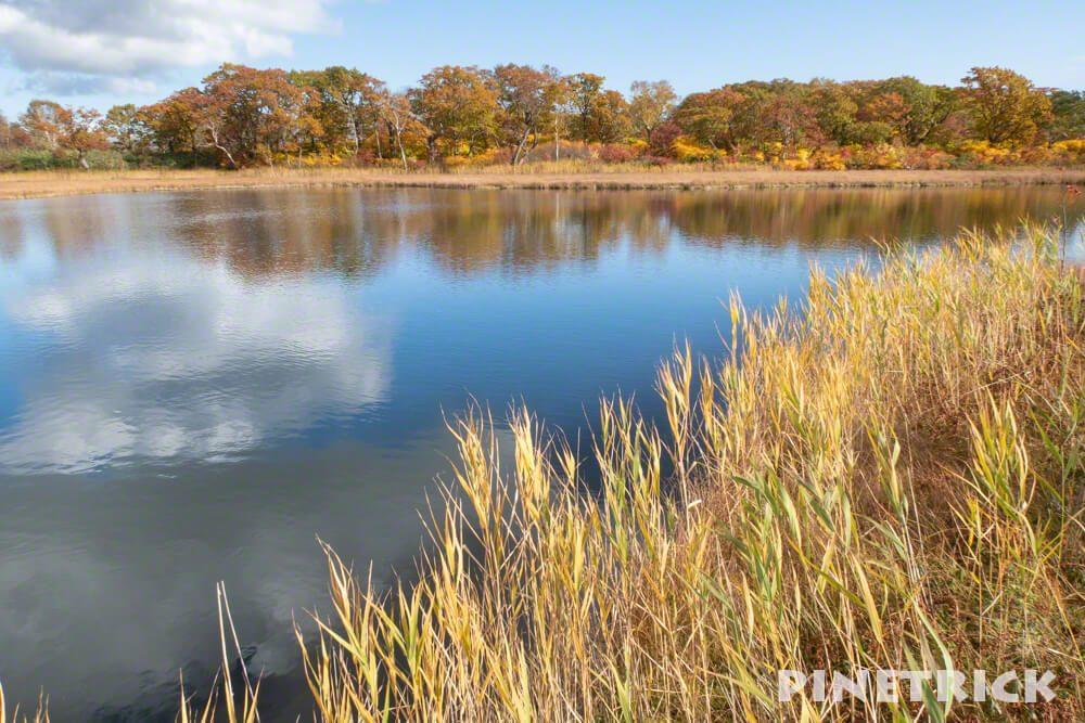 鏡沼 紅葉 10月 観光名所 湿原 トレッキング ハイキング