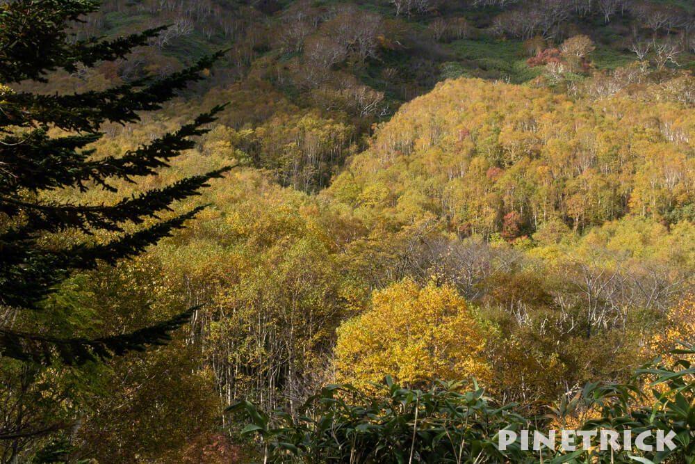 鏡沼 紅葉 10月 観光名所 穴場 秘境 トレッキング ハイキング 湿原 ダケカンバ 10月