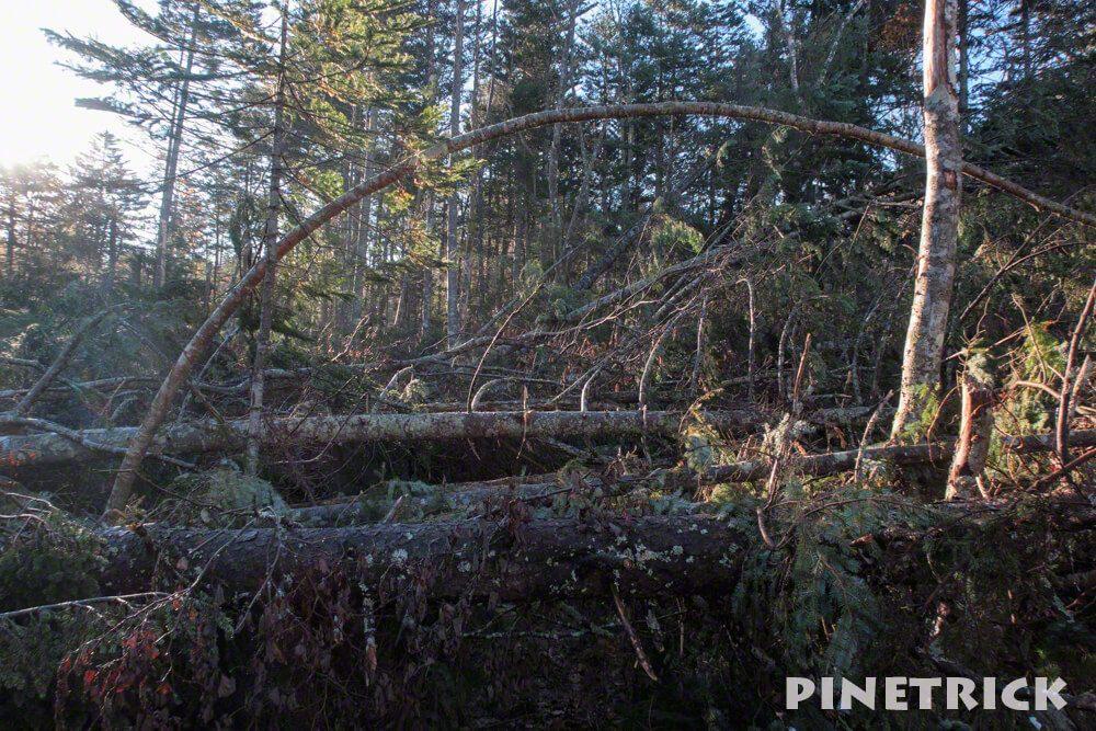 支寒内 樽前山 登山 倒木 台風被害