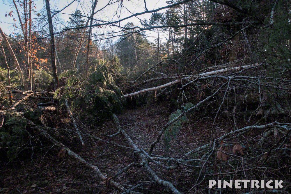 樽前山 登山 支寒内 倒木 台風被害 苔の洞門