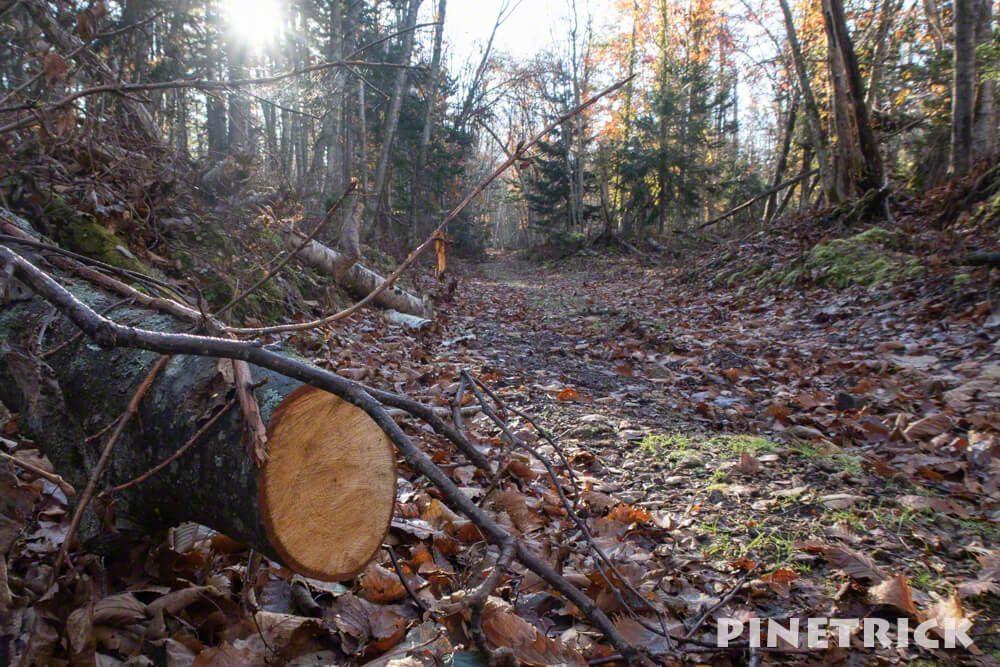 支寒内 樽前山 作業道 林業 登山 倒木 支笏湖 台風被害
