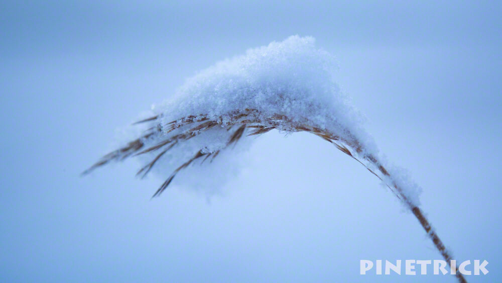 ウトナイ湖 雪 すすき