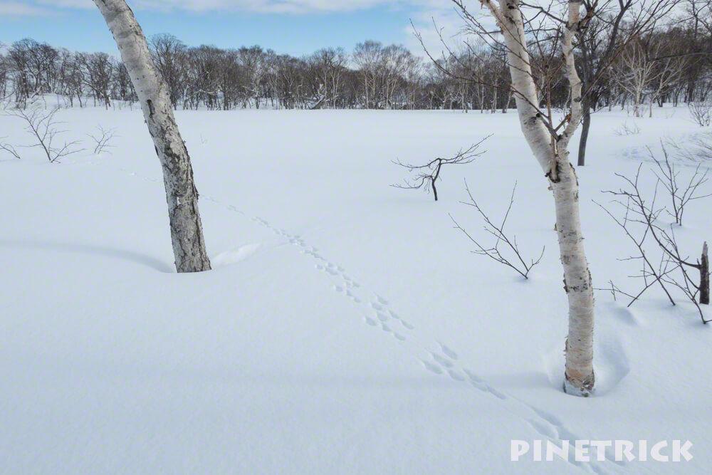 足跡 雪原 白樺 ウサギ かわいい