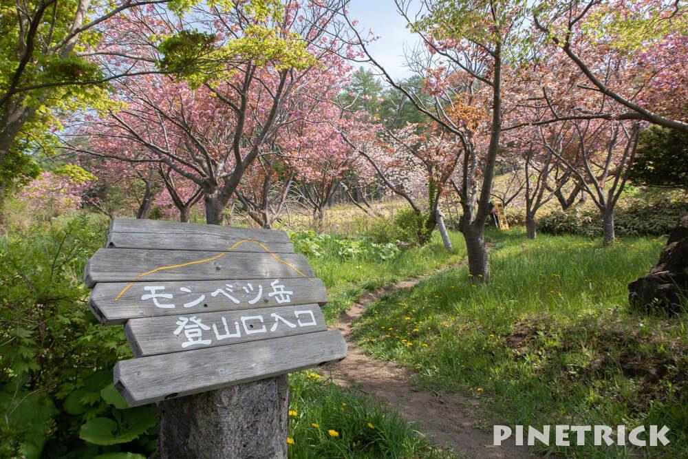 伊達紋別岳 登山口 八重桜