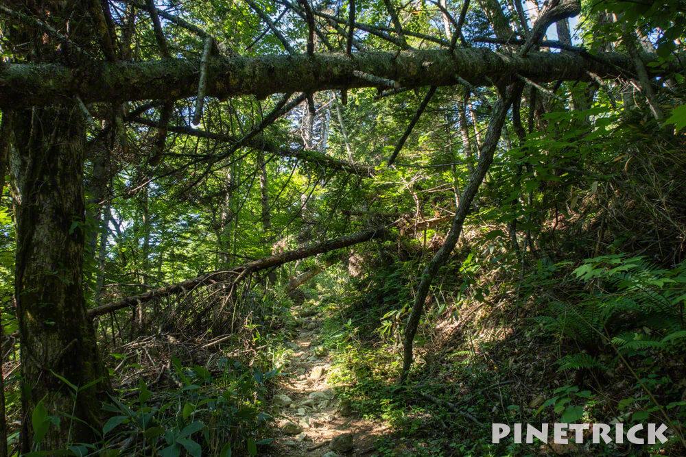 空沼岳 登山道 倒木 アーチ