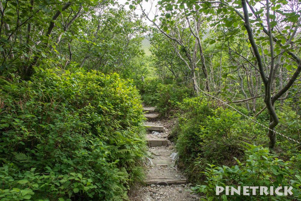 樽前山 登山 樹林帯