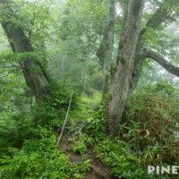 神居尻山 Bコース 登山 トレッキング 道民の森