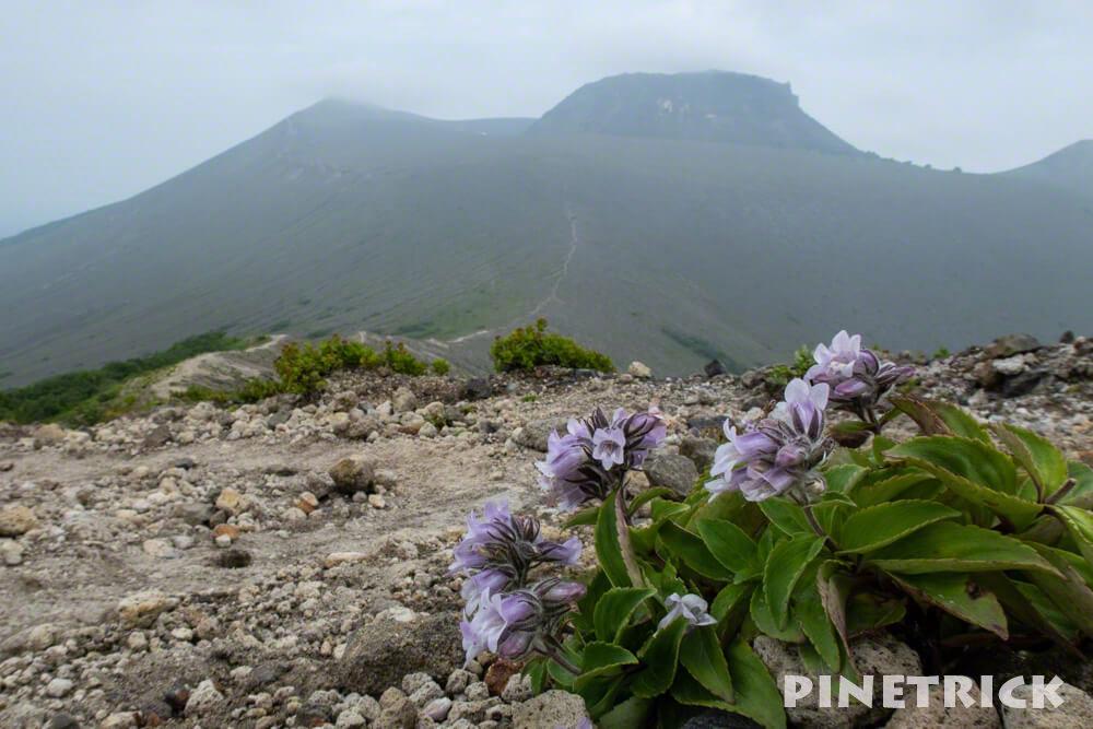 タルマエソウ 東山山頂 溶岩ドーム 932峰 登山 北海道