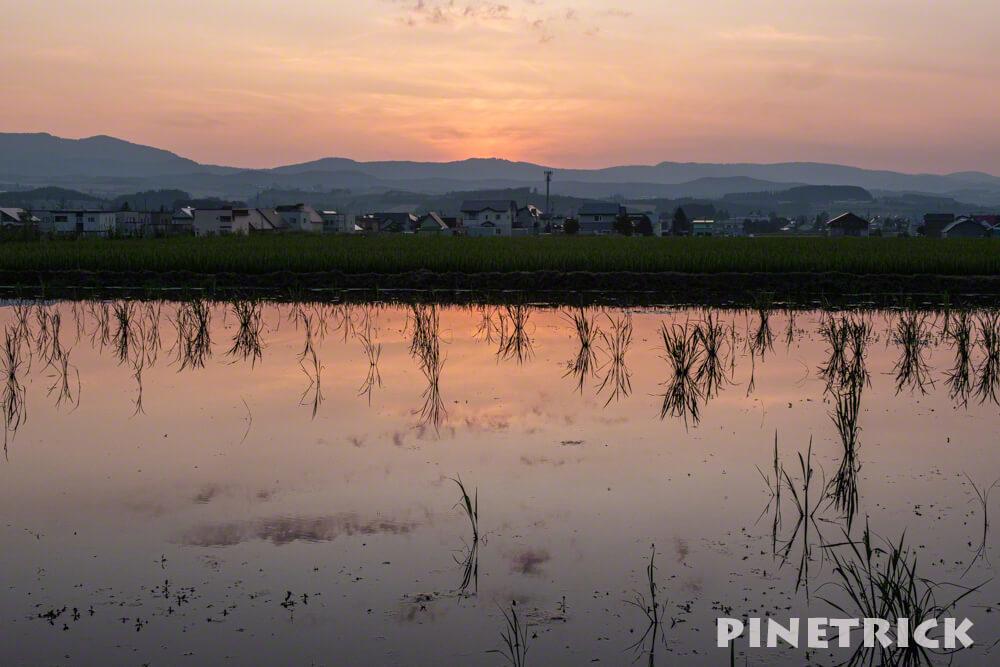 日の出公園 田んぼ 夕景 写り込み 水面