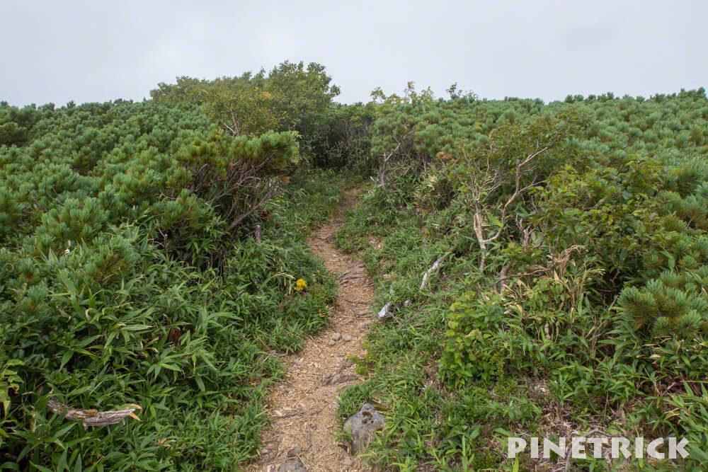 チセヌプリ 山頂 ハイマツ 登山 ニセコ トレッキング ハイキング