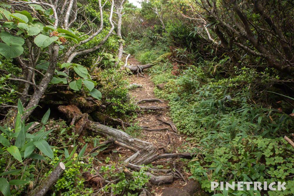 チセヌプリ ハイマツ 登山 ニセコ トレッキング