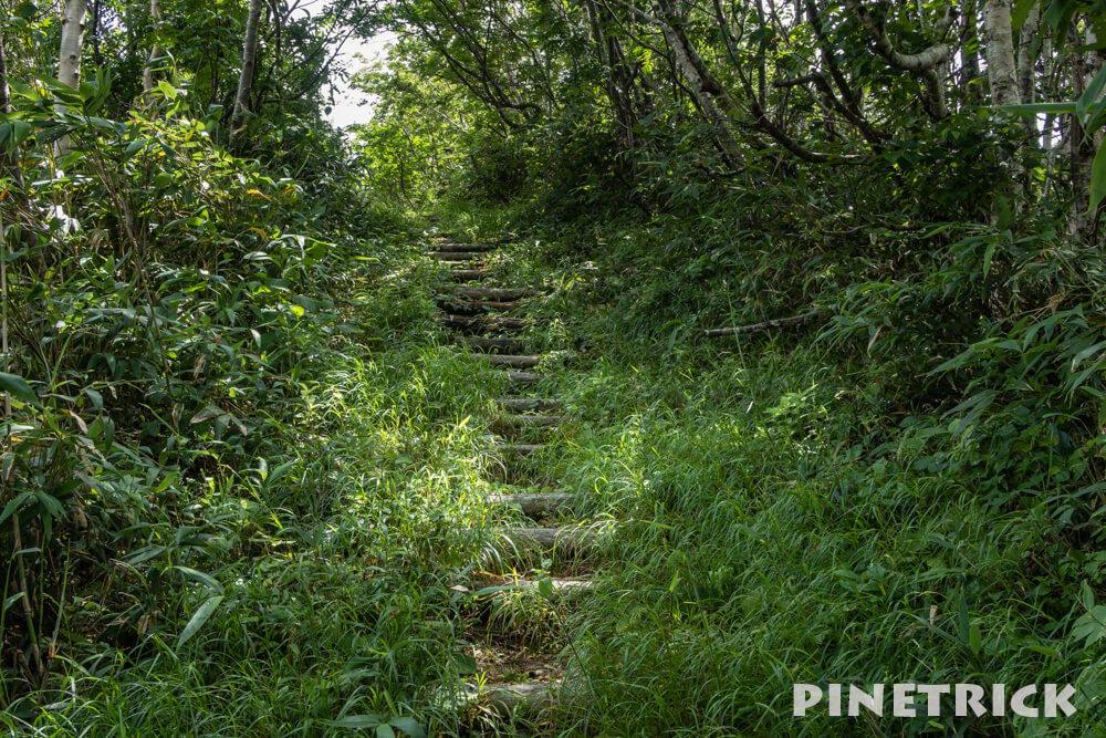 神居尻山 登山 木漏れ日 道民の森 Aコース