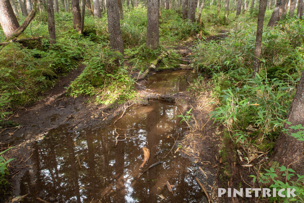 ニペソツ山 登山 幌加温泉コース 泥濘 小川 水たまり