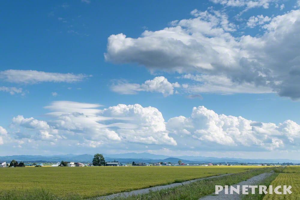 雨竜町 田園風景 のんびり 米 稲 北海道