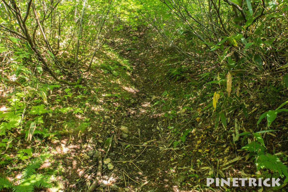 石狩岳 シュナイダーコース 登山道 緑色 夏山 北海道 トレッキング