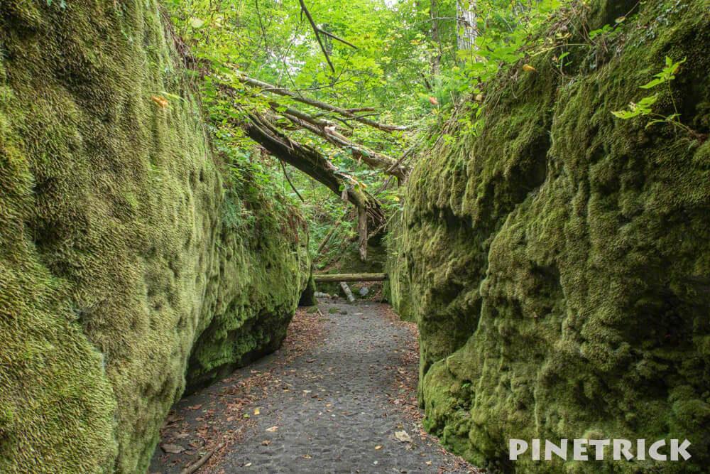 苔の回廊 楓沢 神秘的 歩き方 支笏湖 行き方 駐車場 観光スポット 倒木