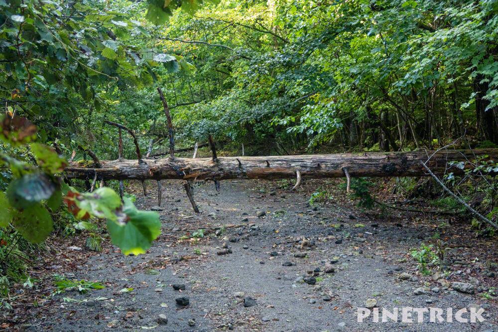 楓沢 入り口 倒木 苔の回廊 観光スポット 観光名所 支笏湖