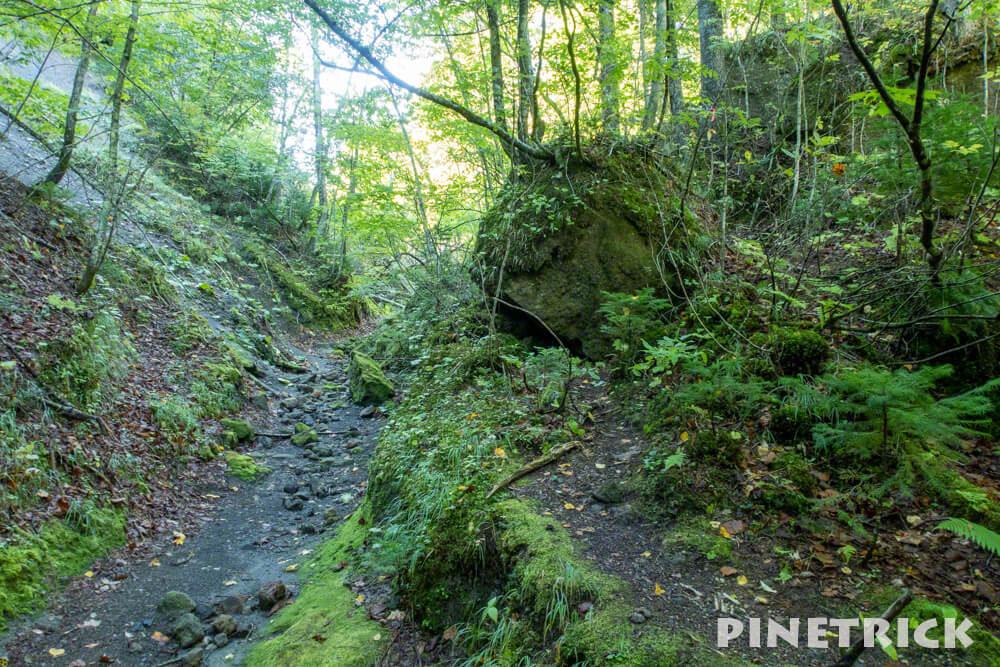 苔の回廊 楓沢 登山 トレッキング 観光スポット 観光名所 第二回廊 分岐