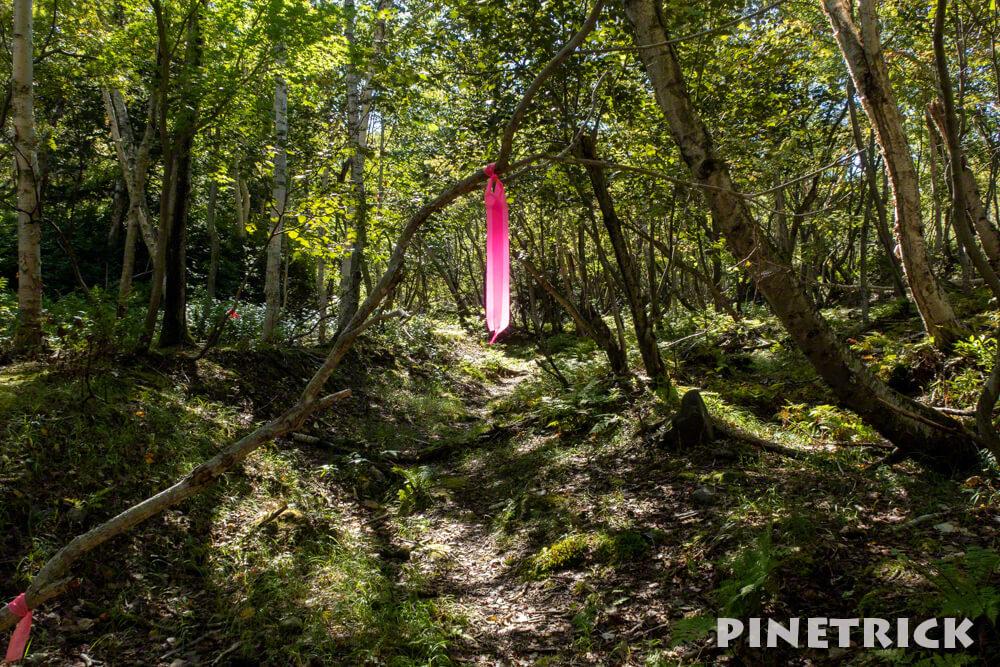 苔の回廊 第三回廊 楓沢 ハイキング 登山 観光スポット ピンクテープ
