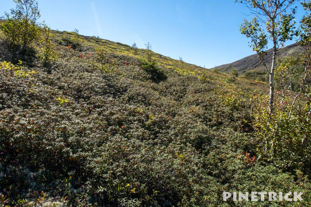 楓沢 苔の回廊 風不死岳 登山