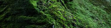 苔の回廊 楓沢 登山 ハイキング 絶景 観光スポット 支笏湖 ヤマレコ