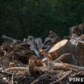 今年も薪ストーブ用に定山渓ダムの流木無料配布に行ってきた