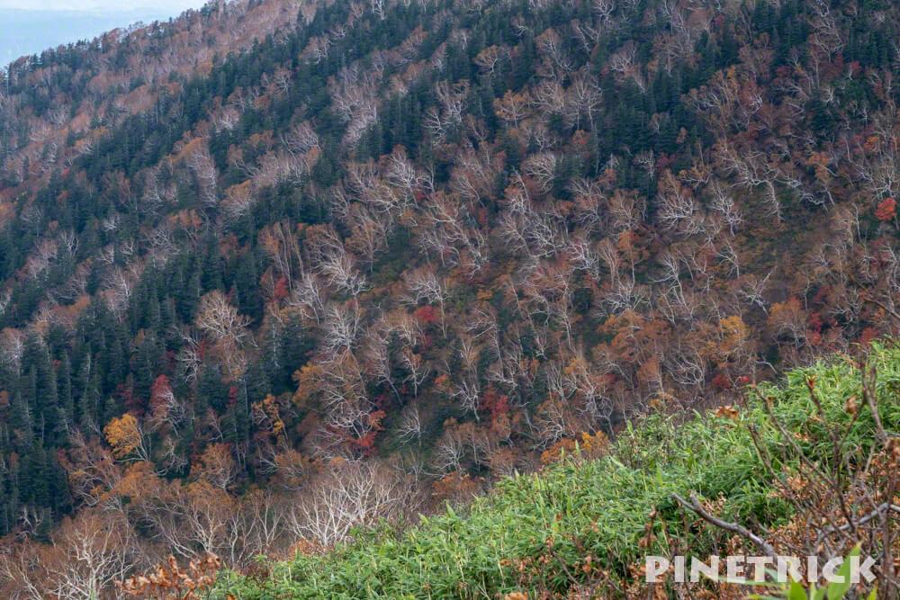 愛山渓温泉 登山 樹林帯 紅葉 沼の平 三十三曲りコース 永山岳 ダケカンバ