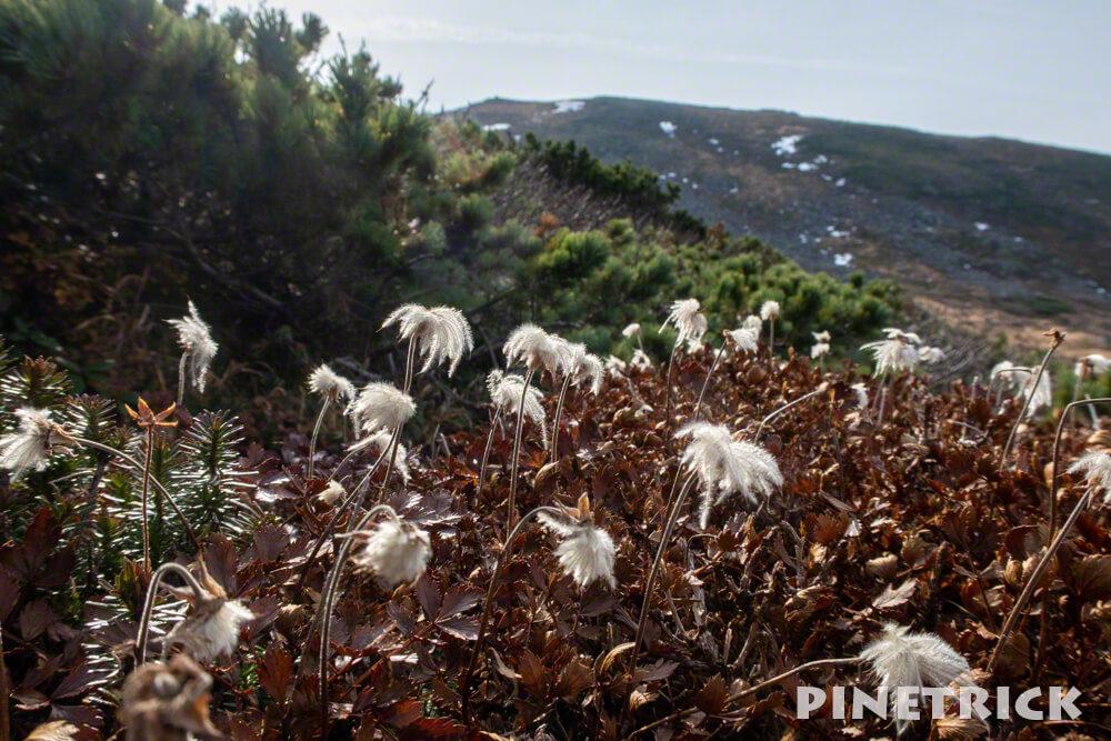 愛山渓温泉 登山 紅葉 沼の平 三十三曲りコース 永山岳 北海道 チングルマ