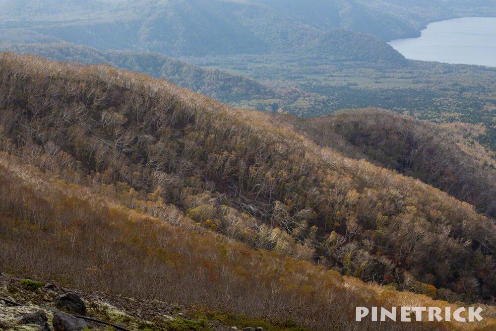 樽前山 西山 ダケカンバ 紅葉 白樺 倒木 落葉 登山 北海道