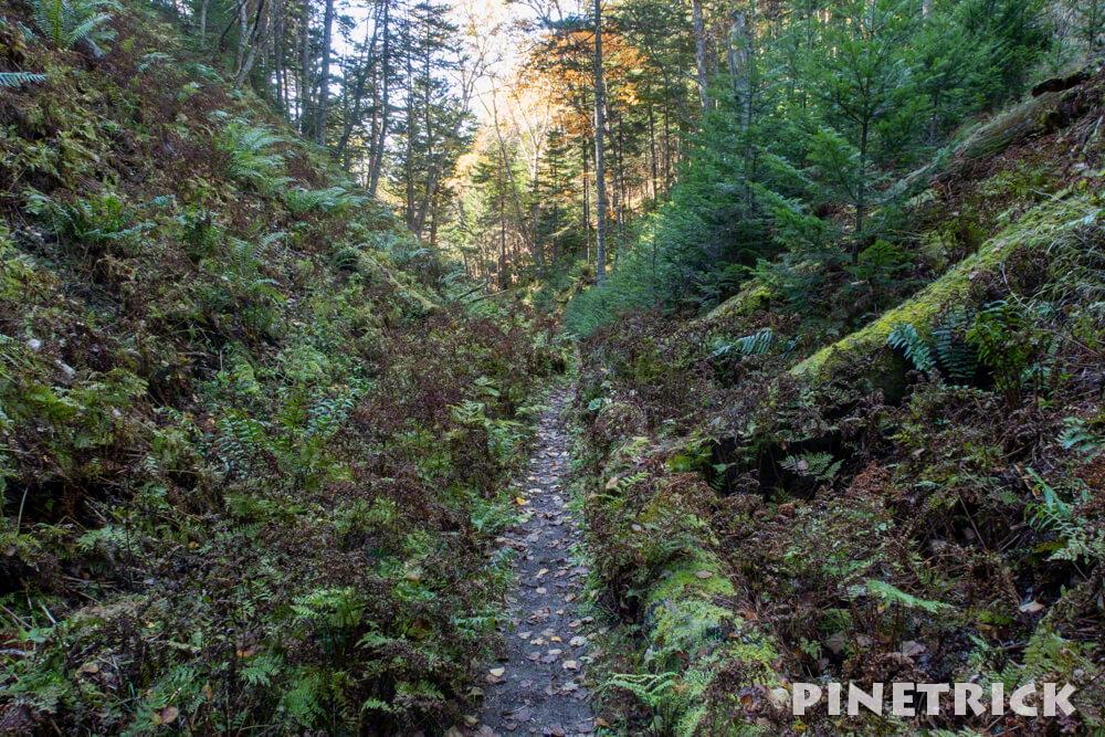 森林コース オンネトー 雌阿寒岳 阿寒富士 登山 北海道 トレッキング 1周コース