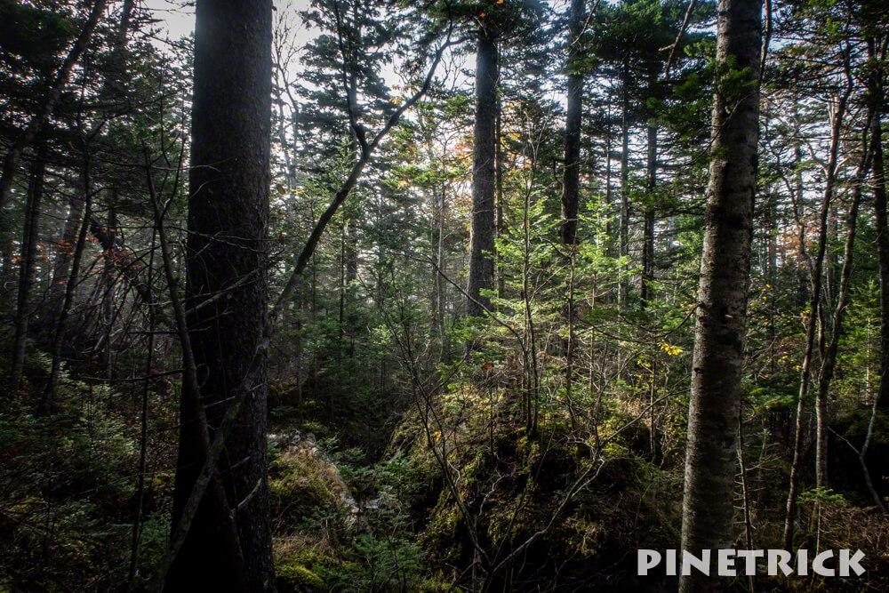 雄阿寒岳 登山 樹林帯 木漏れ日 シルエット