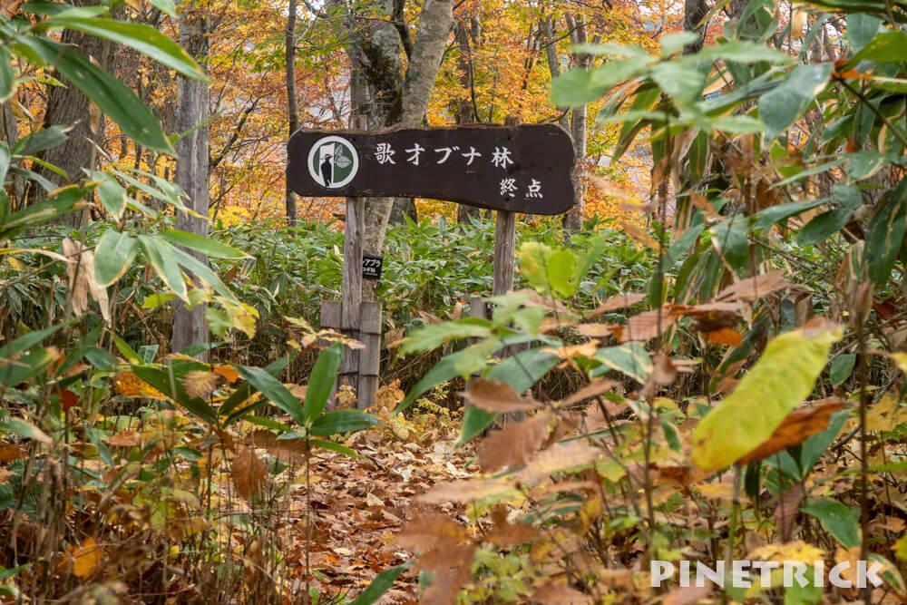 黒松内町 歌才ブナ林 北海道遺産 北限のブナ林 金茶 紅葉 終点