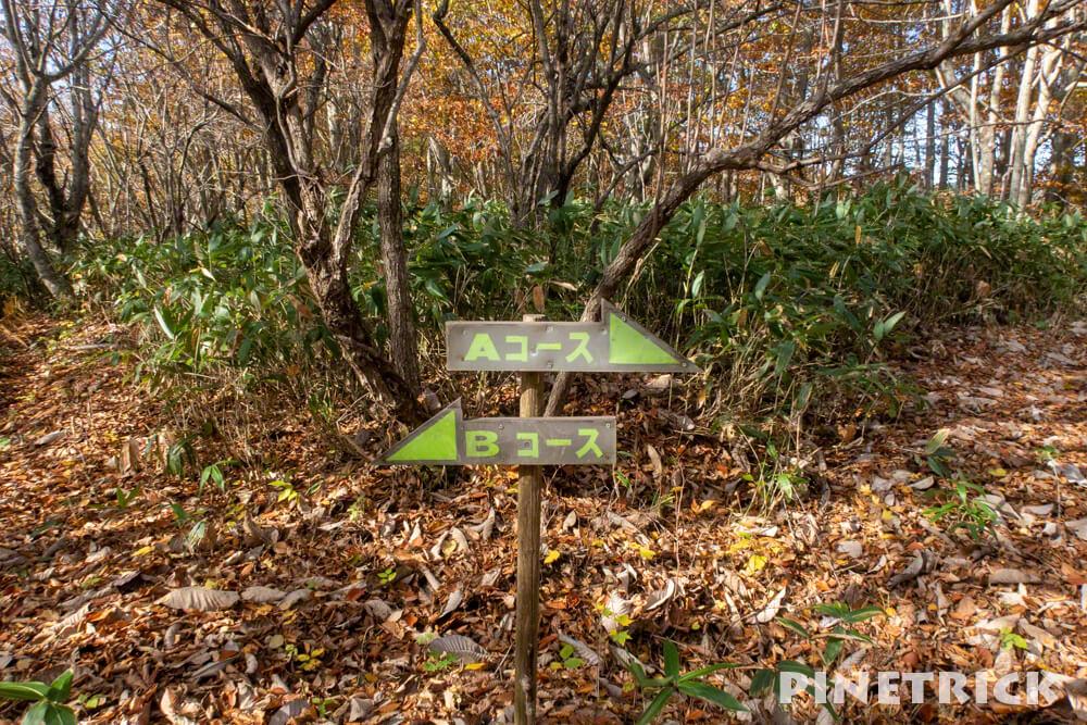 黒松内町 添別ブナ林 北海道遺産 北限のブナ林 紅葉 金茶色 ヒグマ Aコース Bコース