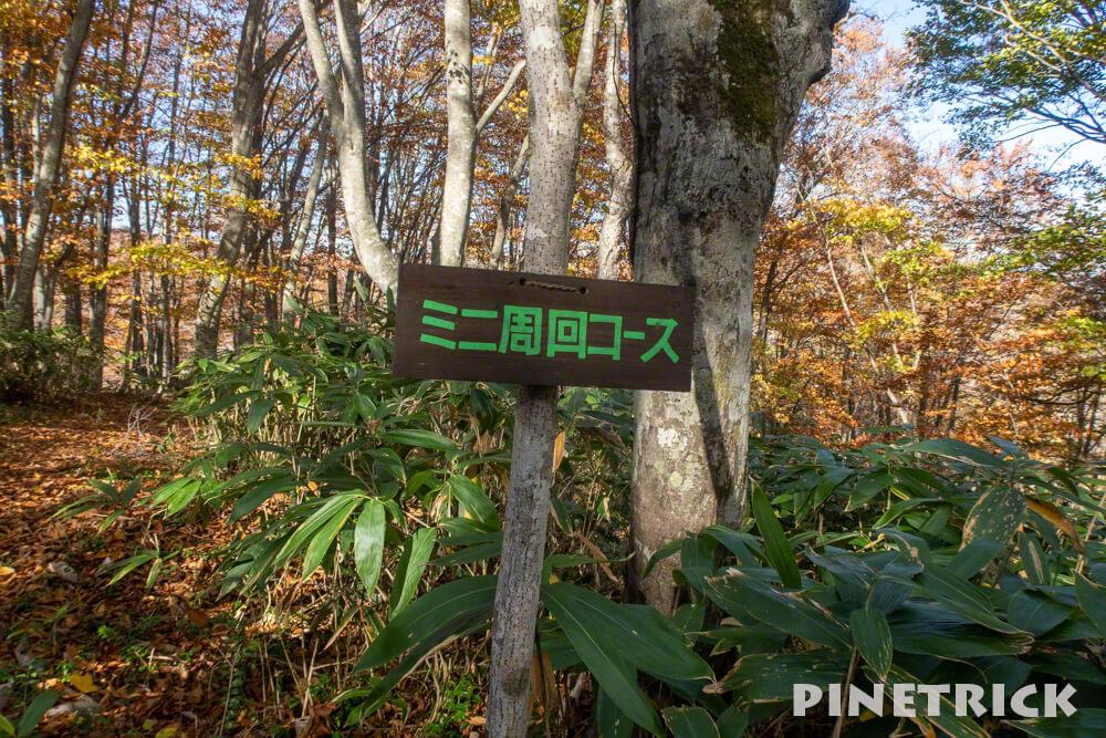 黒松内町 添別ブナ林 北海道遺産 北限のブナ林 紅葉 金茶色 ヒグマ ミニ周回コース