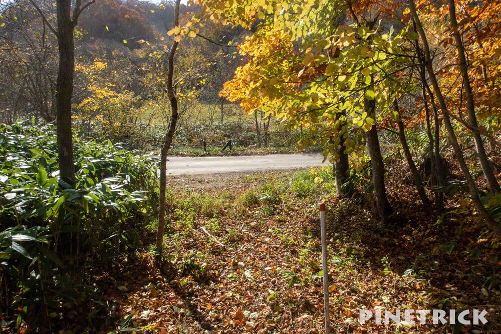黒松内町 添別ブナ林 北海道遺産 北限のブナ林 紅葉 金茶色 ヒグマ Bコース 出口