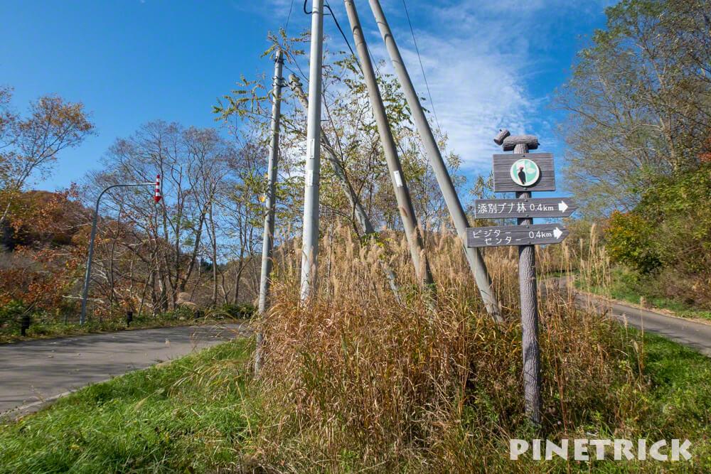 黒松内町 添別ブナ林 北海道遺産 北限のブナ林 紅葉 金茶色 ヒグマ 看板