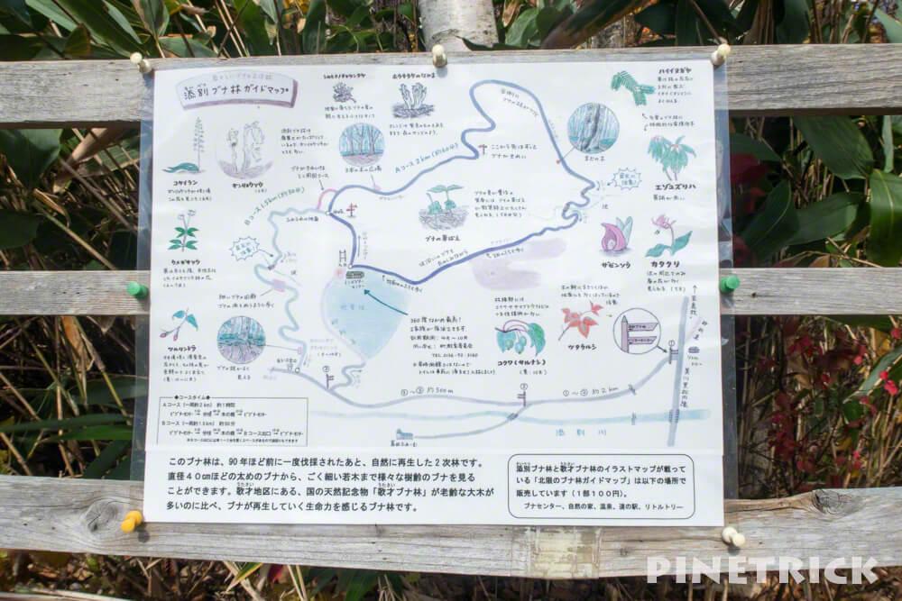 黒松内町 添別ブナ林 北海道遺産 北限のブナ林 紅葉 金茶色 ヒグマ コース図