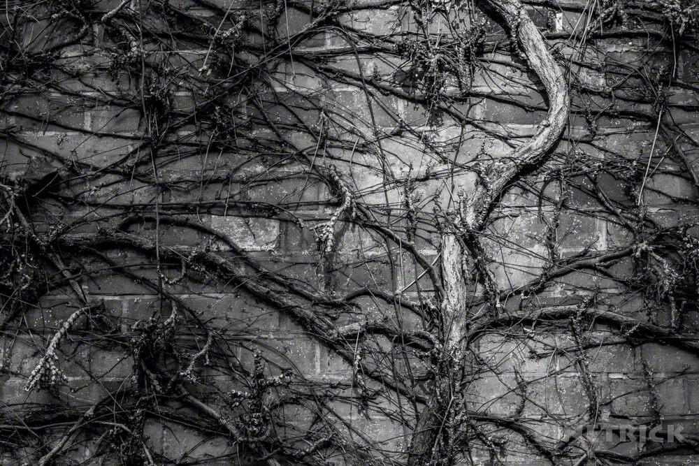 サッポロファクトリー g7xmk3  モノクロ 枯れ木 レンガ