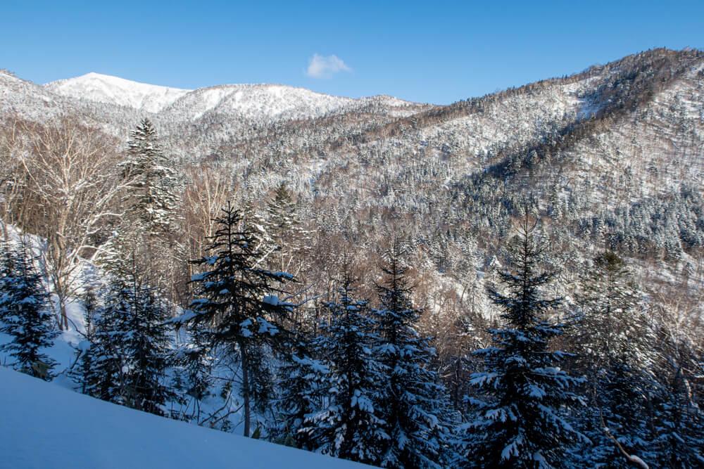漁岳 登山 冬山 北海道 樹林帯